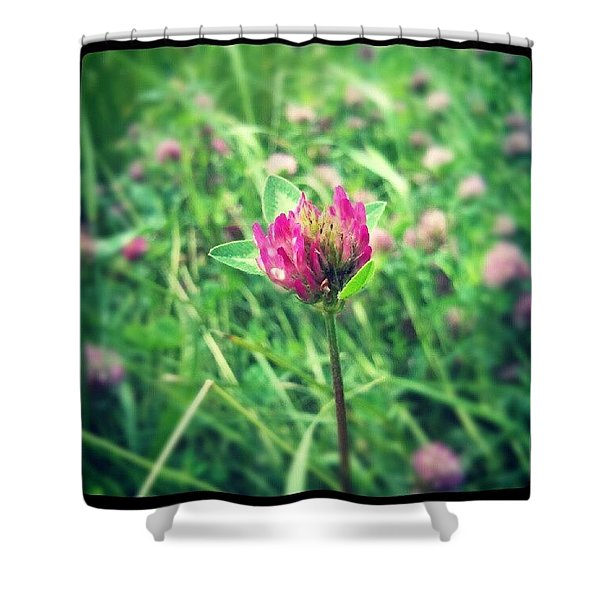 Red Clover Flower Shower Curtain
