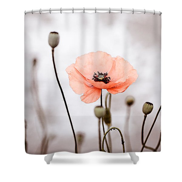 Red Corn Poppy Flowers 01 Shower Curtain