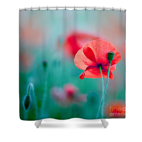 Red Corn Poppy Flowers 04 Shower Curtain