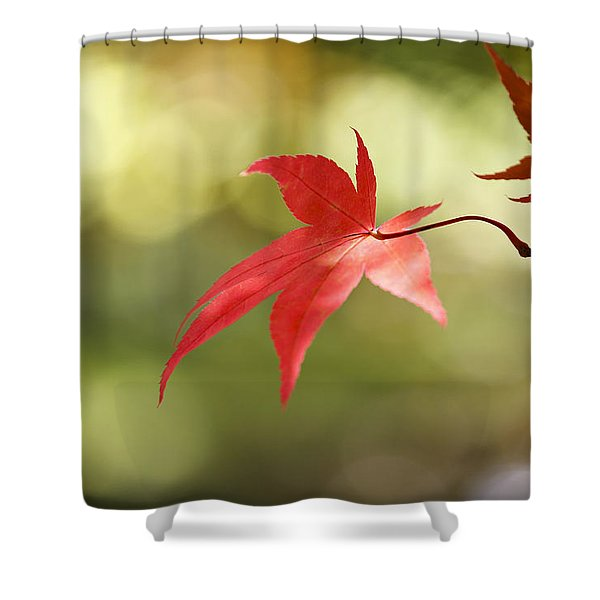 Red Leaf. Shower Curtain