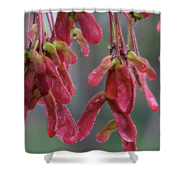 Red Maple Keys With Raindrops Shower Curtain