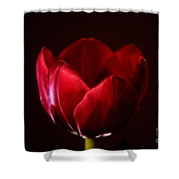 Red Tulip Shower Curtain