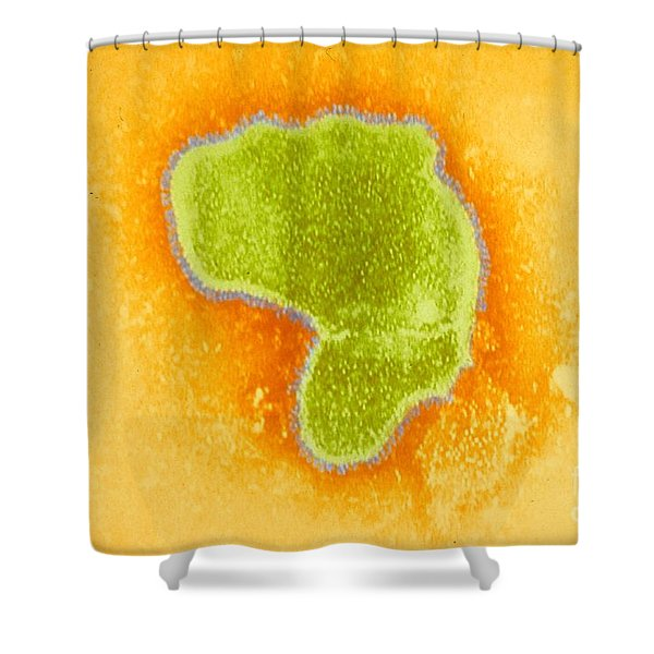 Respiratory Syncytial Virus Tem Shower Curtain
