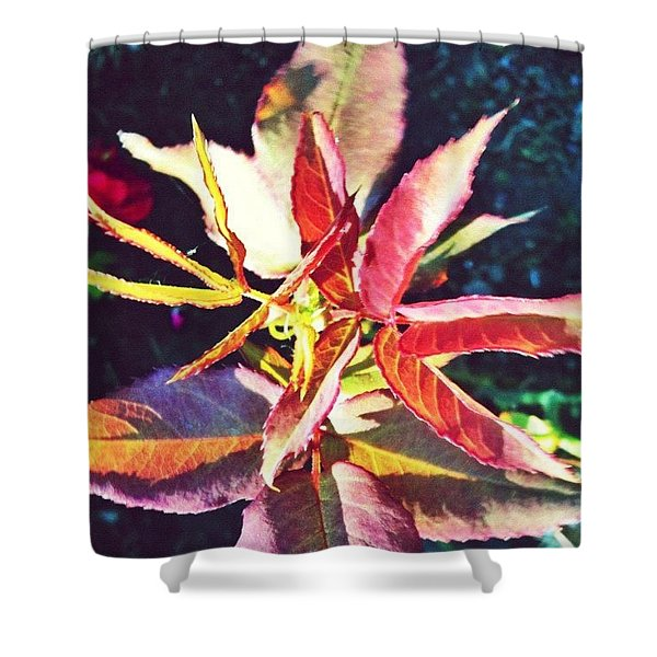 Rosy Glow - Rose Leaves Afternoon Light Shower Curtain