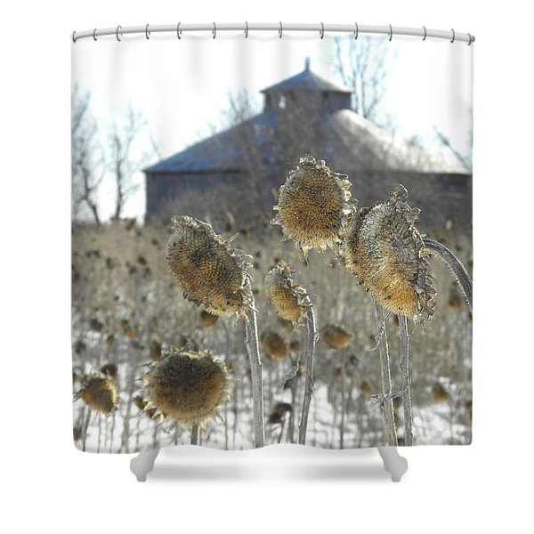 Round Barn With Sunflowers Shower Curtain