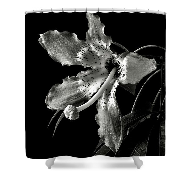 Silk Flower In Black And White Shower Curtain