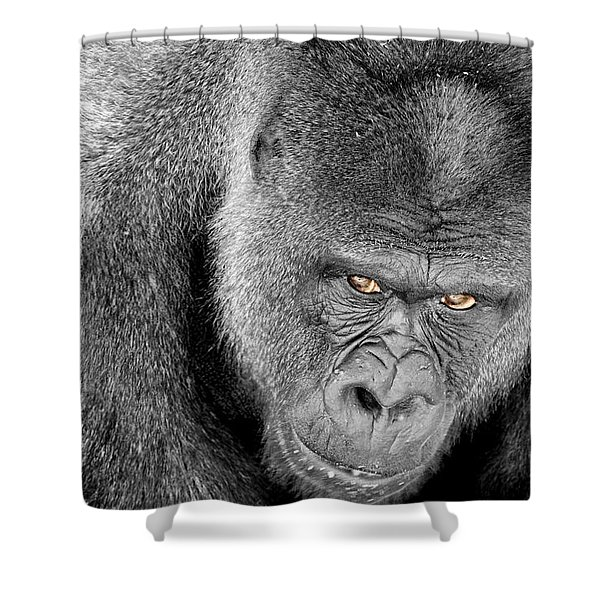 Silverback Staredown Shower Curtain