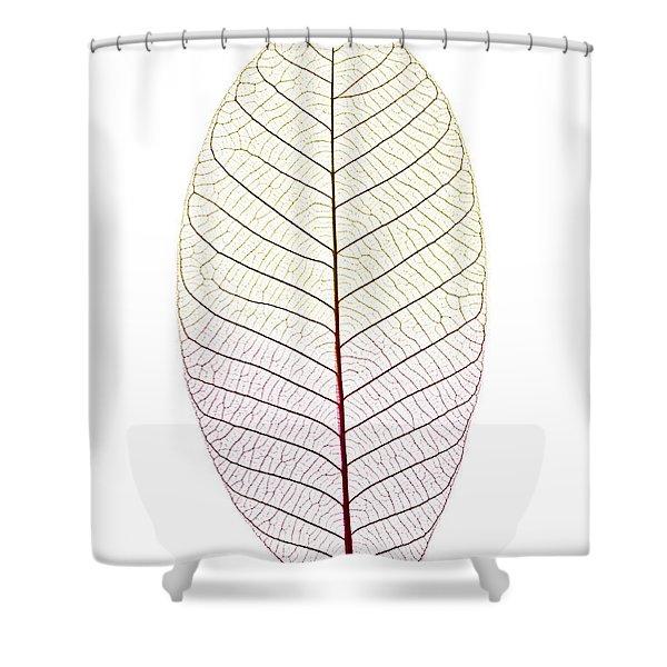 Skeleton Leaf Shower Curtain