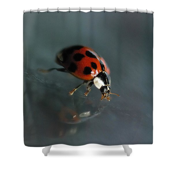 Slip And Slide Shower Curtain