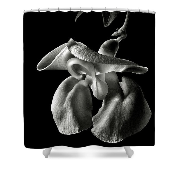 Snail Flower In Black And White Shower Curtain