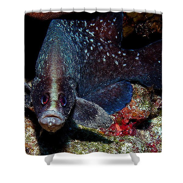 Soapfish Shower Curtain