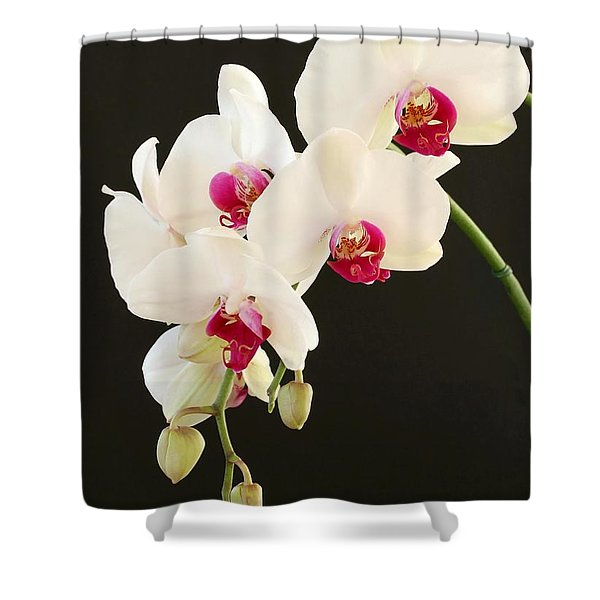 Spray Of White Orchids Shower Curtain