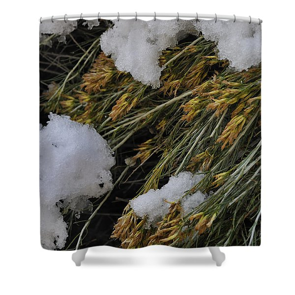 Spring Arrives Shower Curtain