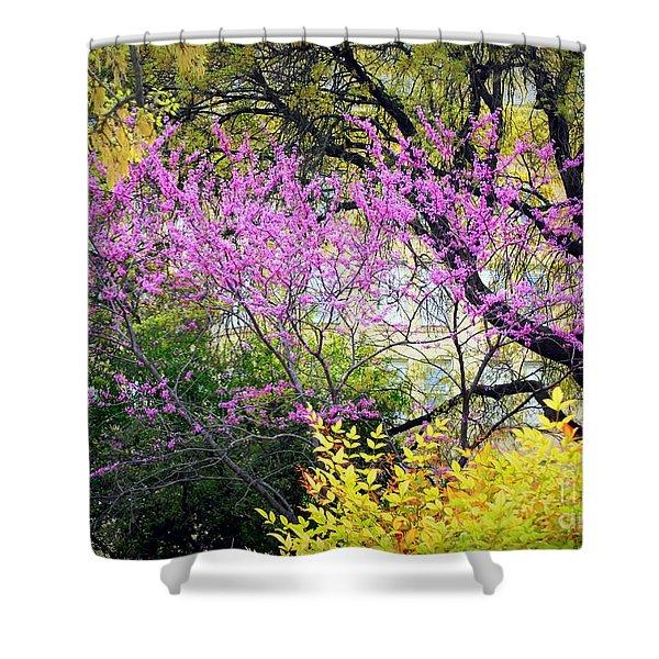Spring Trees In San Antonio Shower Curtain