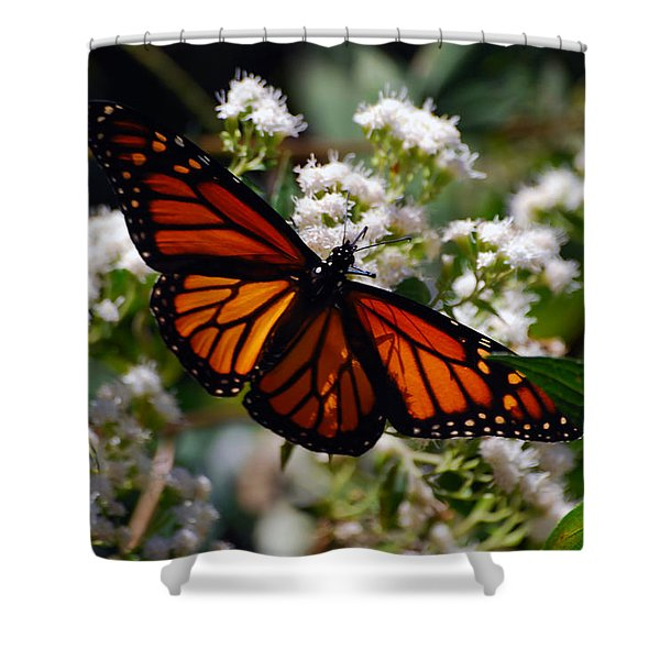 Summers Treat Shower Curtain