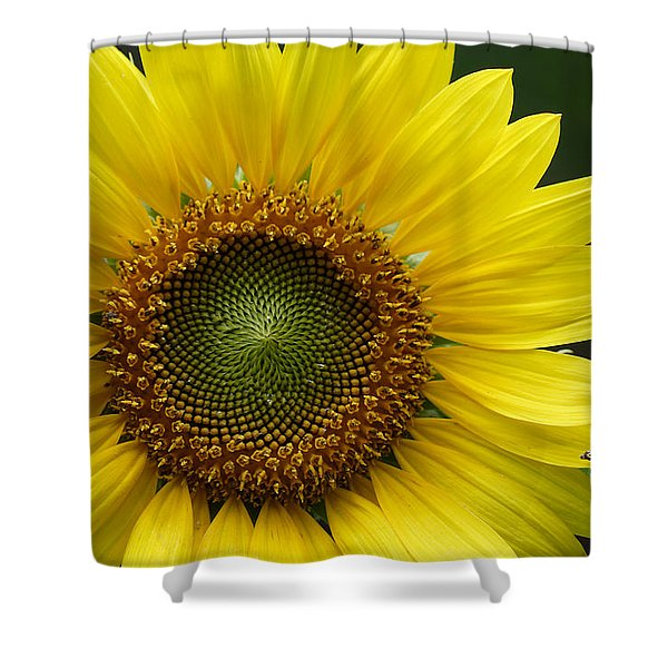 Sunflower With Insect Shower Curtain