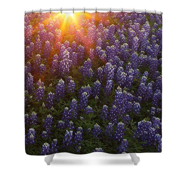 Sunset Over Bluebonnets Shower Curtain