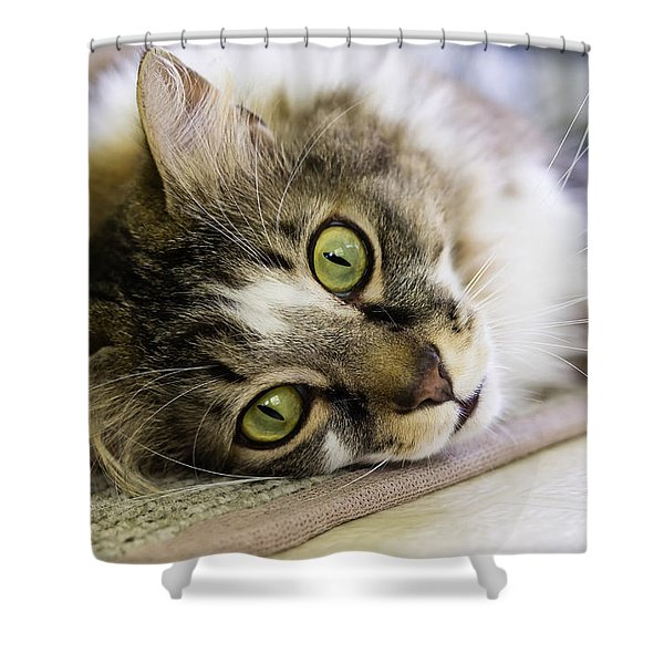 Tabby Cat Looking At Camera Shower Curtain