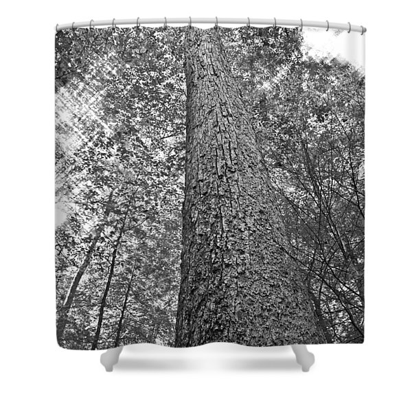 Tall Tree With Sunshine Shower Curtain