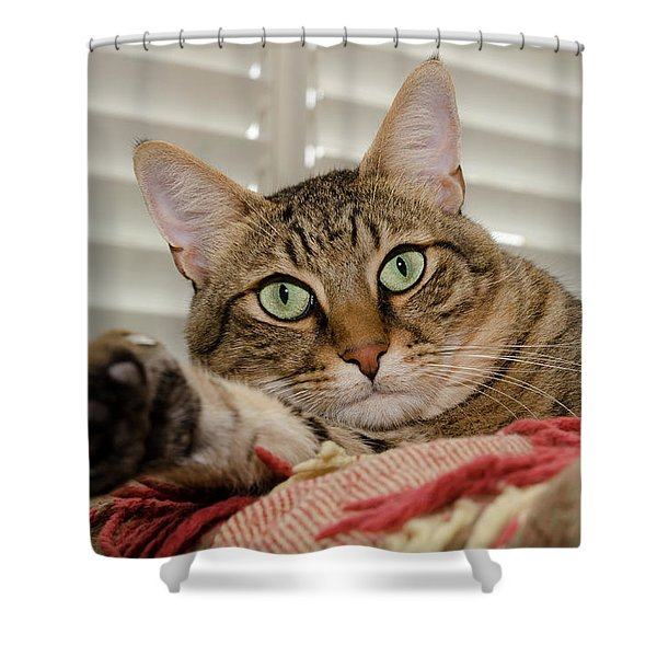 The Cat With Green Eyes Shower Curtain