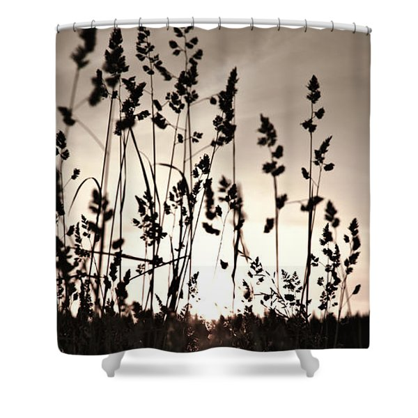 The Grass At Sunset Shower Curtain