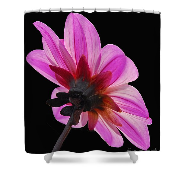 The Other Side Of The Floral Shower Curtain