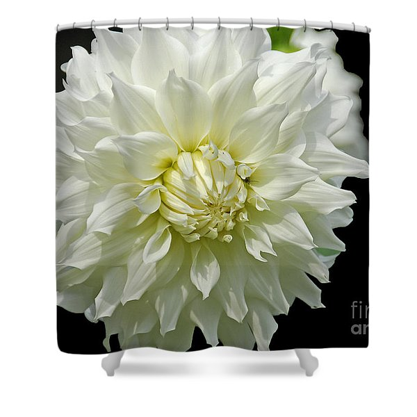 The White Dahlia Shower Curtain