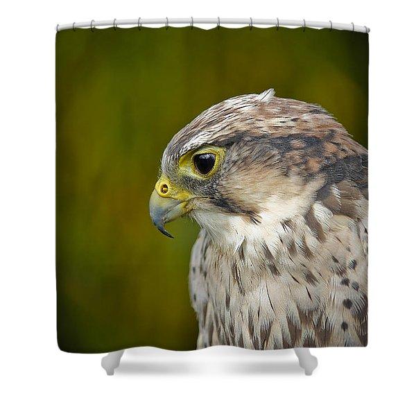 Thoughtful Kestrel Shower Curtain