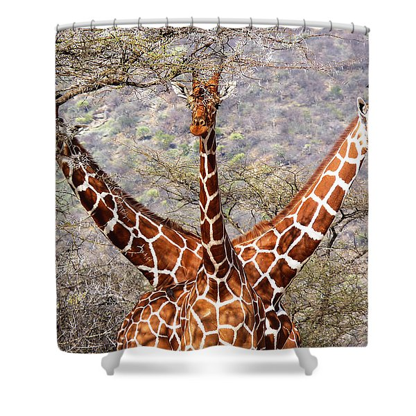 Three Headed Giraffe Shower Curtain