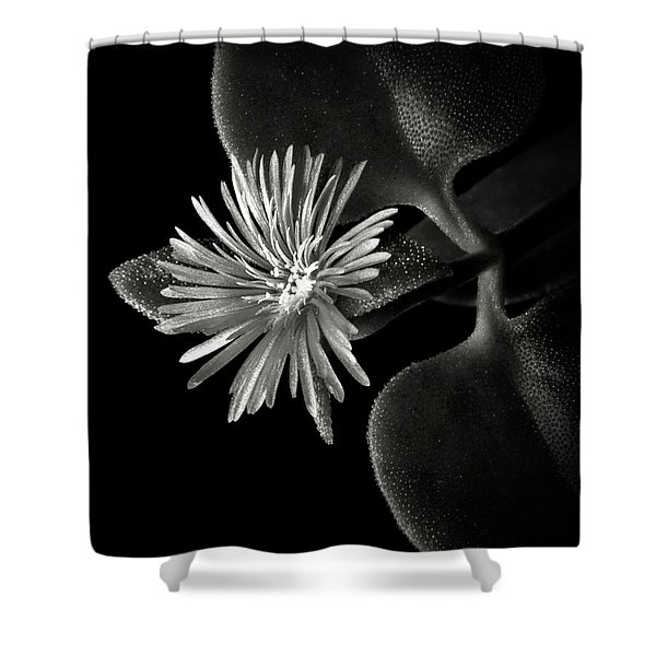 Tiny Ice Plant In Black And White Shower Curtain