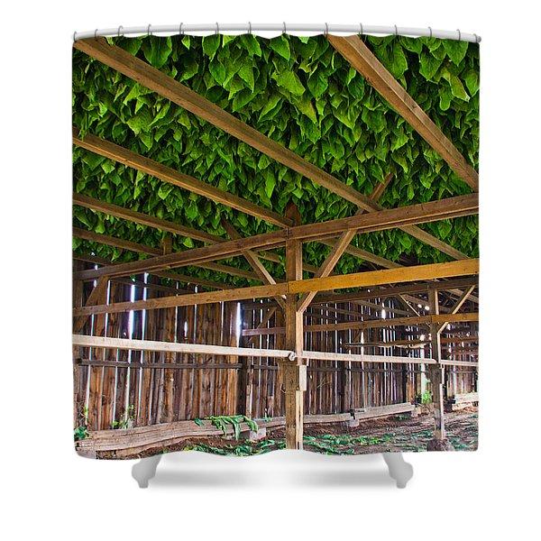 Tobacco Shower Curtain