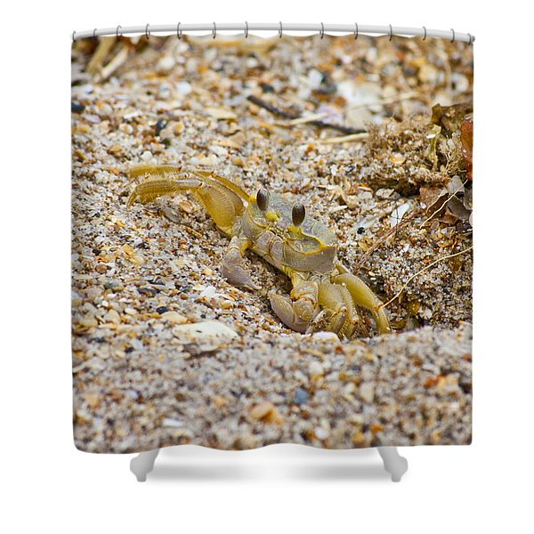 Topsail Ghost Crab Shower Curtain