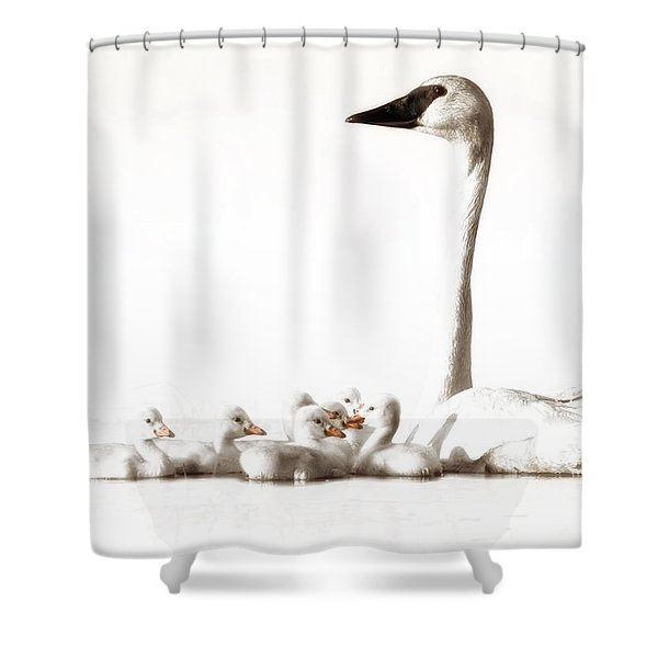 Trumpeter Swans Shower Curtain