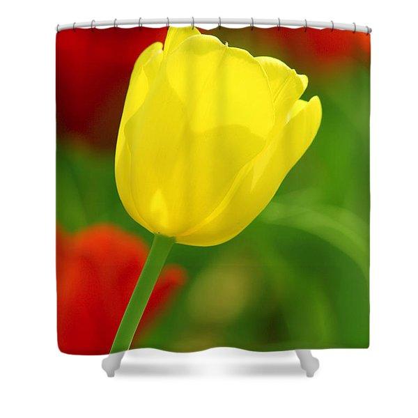 Tulipan Amarillo Shower Curtain