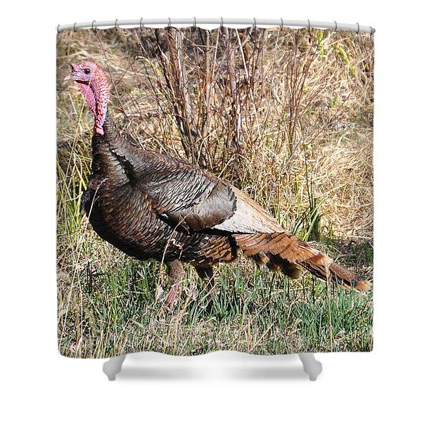 Turkey In The Straw Shower Curtain