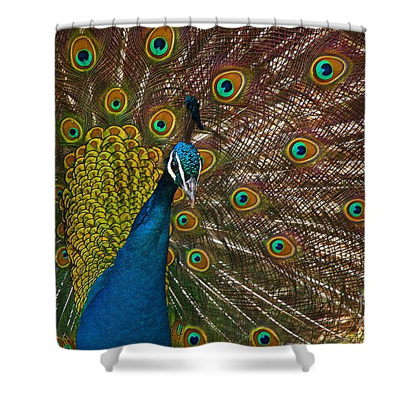 Turquoise And Gold Wonder Shower Curtain