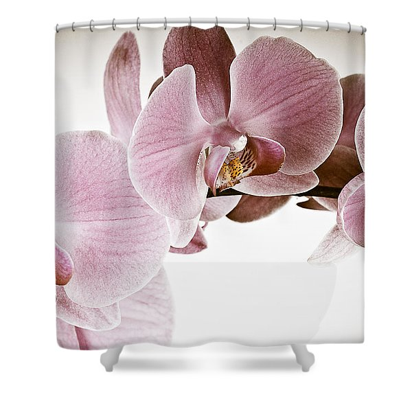 Vintage Orchid Shower Curtain