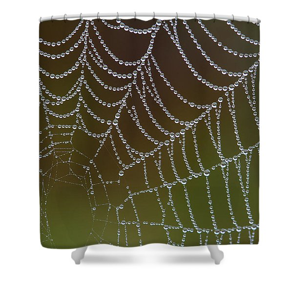 Web With Dew Shower Curtain