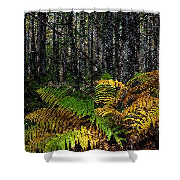 Where The Ferns Grow Shower Curtain