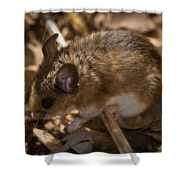 White-footed Mouse Shower Curtain