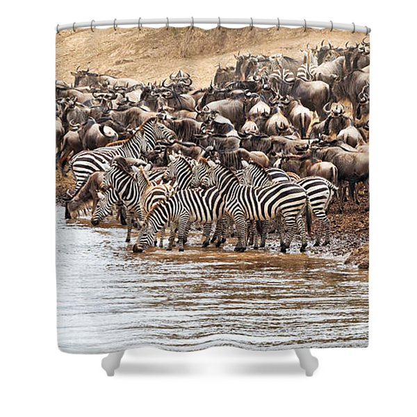 Shower Curtain featuring the photograph Wildebeest And Zebra Before The Crossing by Perla Copernik