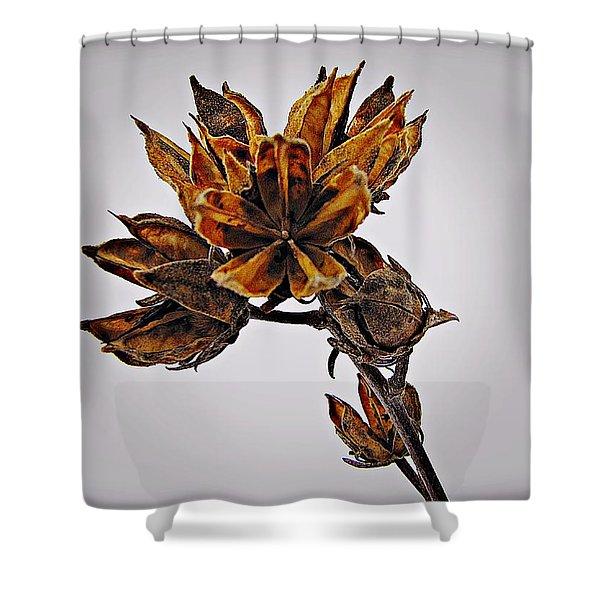 Winter Dormant Rose Of Sharon Shower Curtain