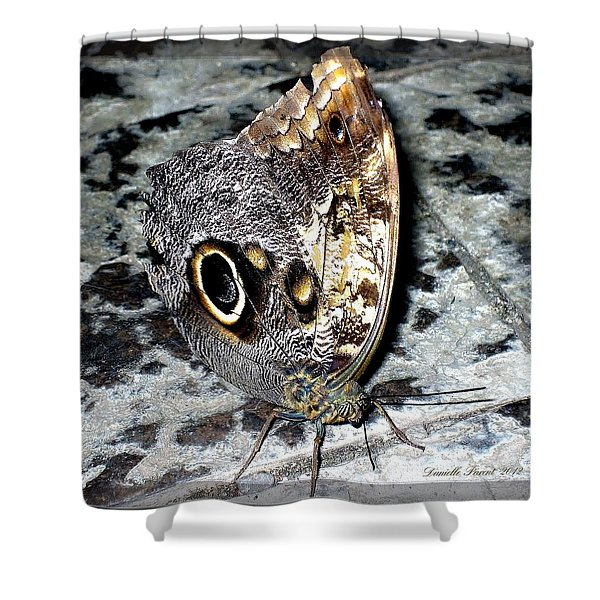 Wow Butterfly Shower Curtain