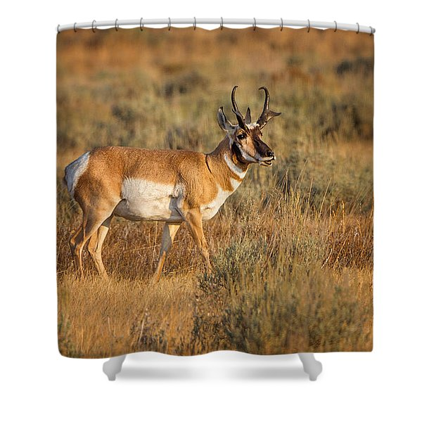 Wyoming Pronghorn Shower Curtain