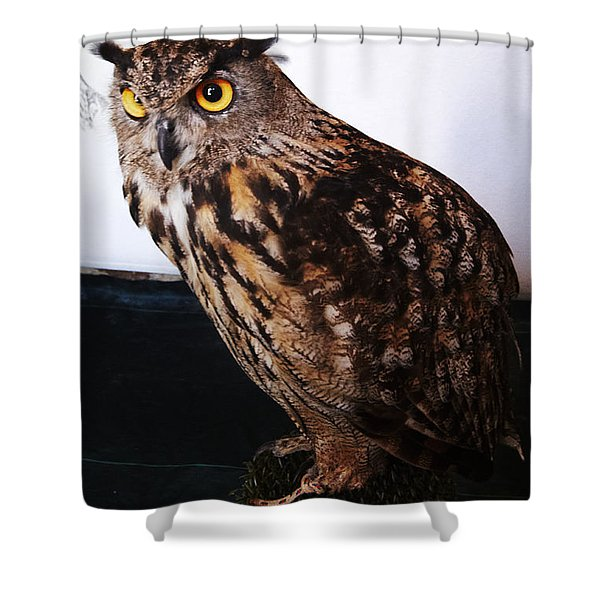Shower Curtain featuring the photograph Yellow-eyed Owl Side by Agusti Pardo Rossello
