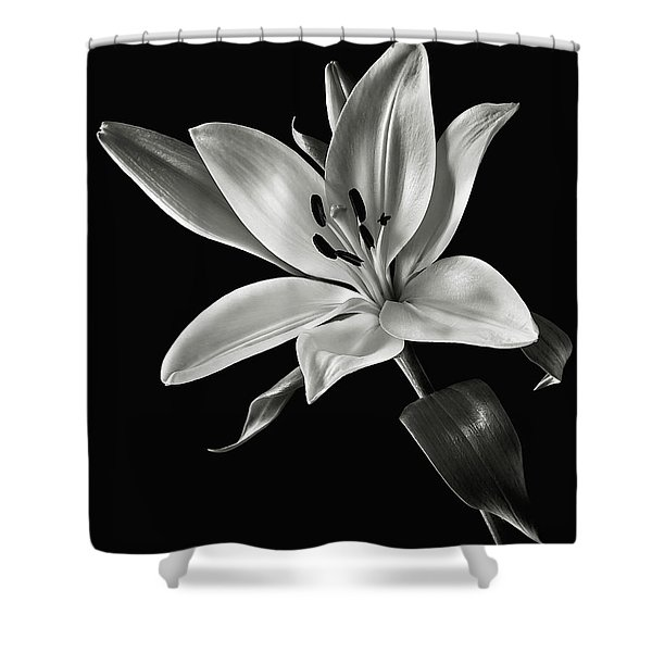 Yellow Tiger Lily In Black And White Shower Curtain