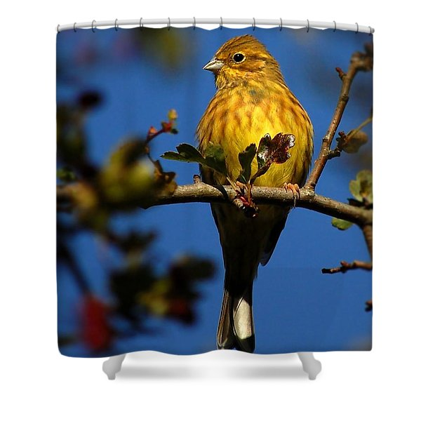 Yellowhammer Shower Curtain