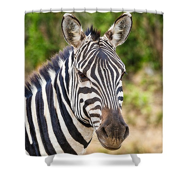 Zebras In The Masai Mara Shower Curtain