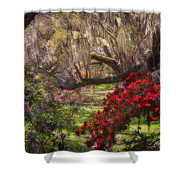 Shower Curtain featuring the photograph  Azaleas In Oak Trees by Ken Barrett