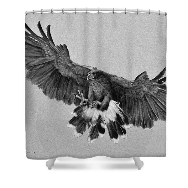 Da181 Harris's Hawk By Daniel Adams Shower Curtain